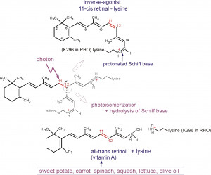 pd_5-04 retinal photoisomerization